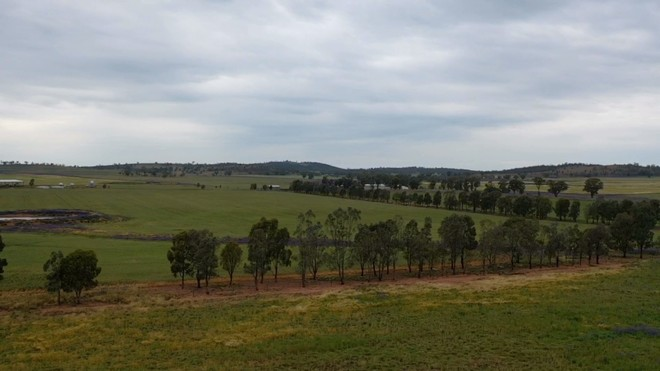 Vendors Will Meet the Market- All Offers Submitted- 'Ben Hall' Country- 1167 Acres of Mixed Farming