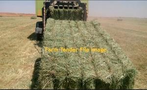 Rhodes Grass Hay    250 mt