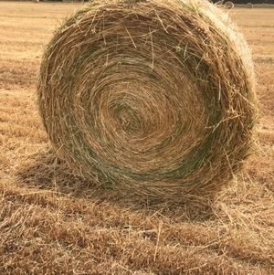 Oaten/Ryegrass Rolls  - Approximately 250 rolls - TO BE SOLD BY THE ROLL