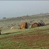 Organic Compost Hay