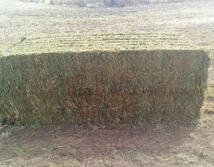 2 single loads of New Season Vetch Hay Del Gippsland