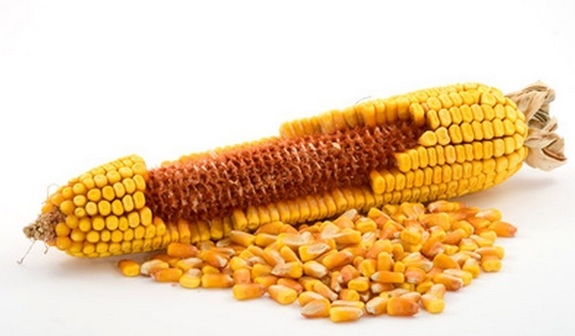 200mt Maize ex farm + delivery