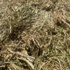 Organic Pasture Hay  Rye/Clover