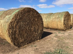 Excellent Quality Clover in Round bales