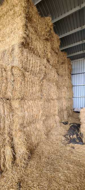 Under Auction - Wheaten Hay Big Square Bales - 2% + GST Buyers Premium On All Lots