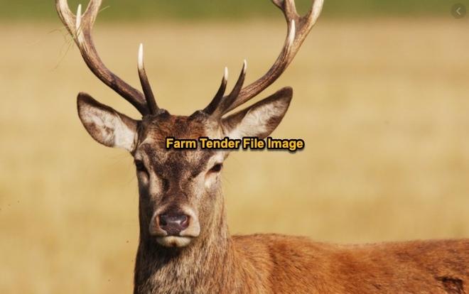 WANTED Adult Deer