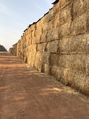 Canola Hay 620kg Bales Approx