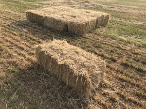 Small squares hay rye/clover