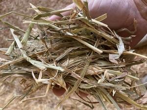 240mt Wheaten Hay 500kg 8x4x3 Bales
