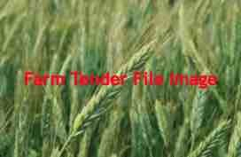 Wanted 10 m/t of Fusion Triticale Seed