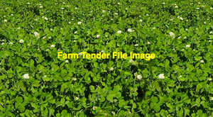 Balansa Clover Seed