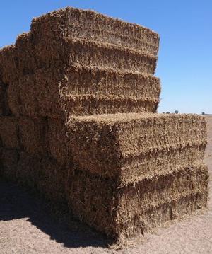 Pea Straw Large Squares