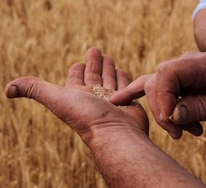 Share farming