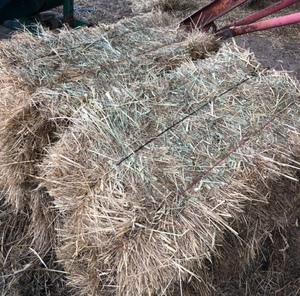 small square grass hay