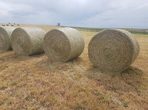 Good Quality Wheat /Vetch Hay For Sale